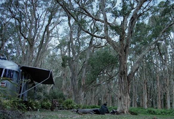 There is something truly beautiful about a Melaleuca forest.