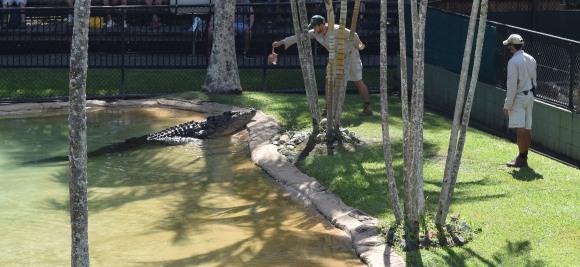 It's Croc Time