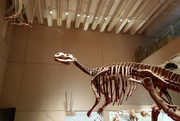 Muttaburrasaurus, Diprotodons, and Pterosaurs, Oh My. Image Credit: Queensland Museum/Brian MacNamara