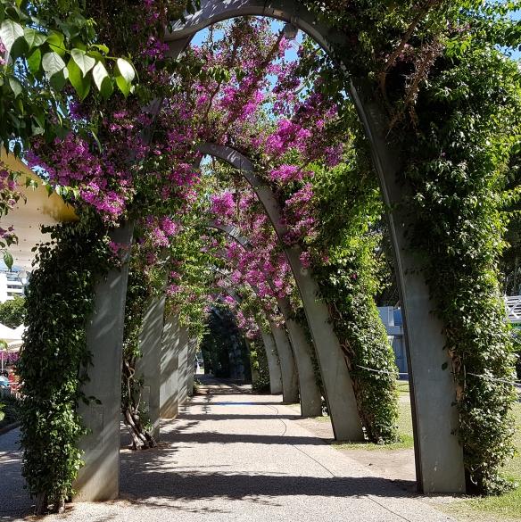 Southbank's Bougainvillea Arch. Image Credit: Brian MacNamara