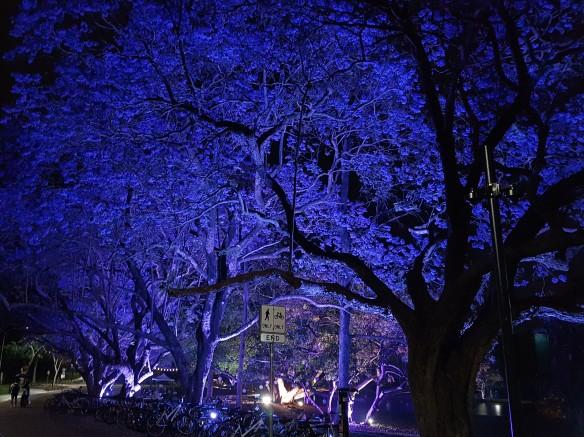 The trees up close and purple. Image Credit: Brian MacNamara.