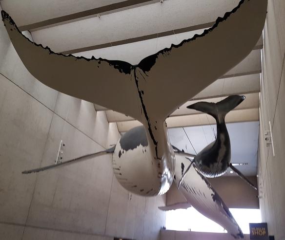 Whales at the Queensland Museum. Image Credit: Brian MacNamara