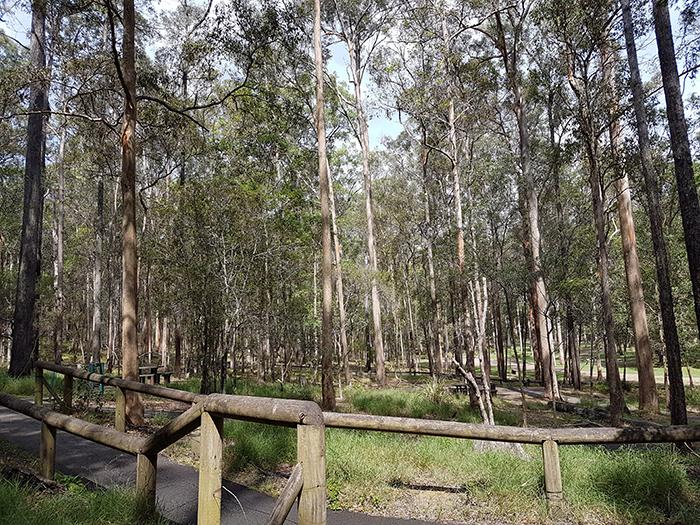 Daisy Hill Conservation Park & Koala Centre. Image Credit: Brian MacNamara
