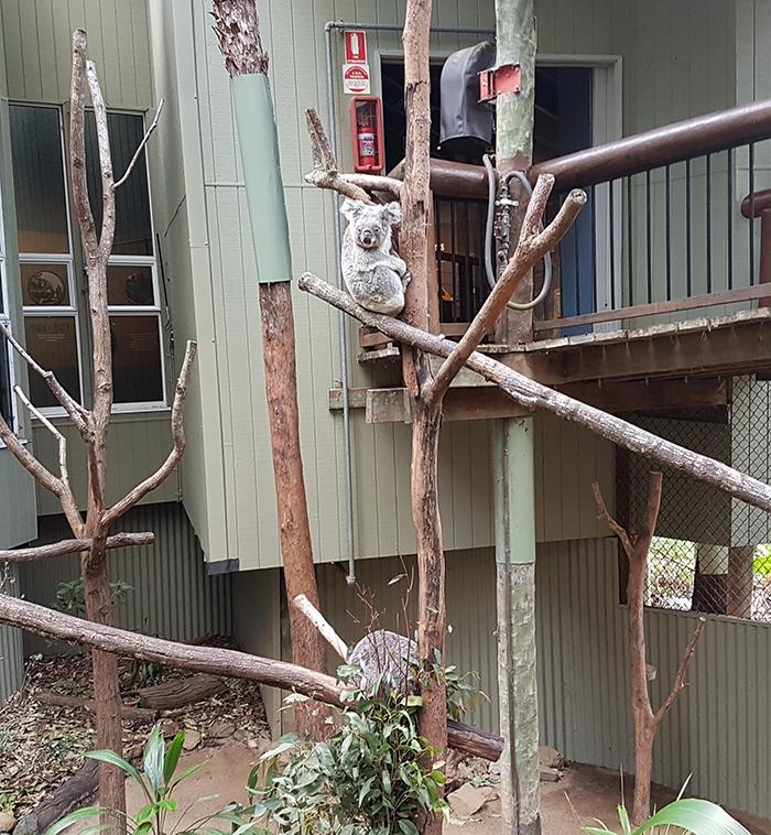 Daisy Hill Conservation Park & Koala Centre. Image Credit: Brian MacNamara.