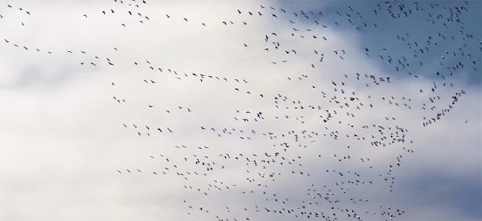 Birders. Image Credit: Netflix.
